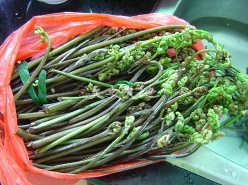 贵州野菜 蕨菜